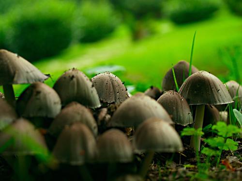 mushroom fungi photograph