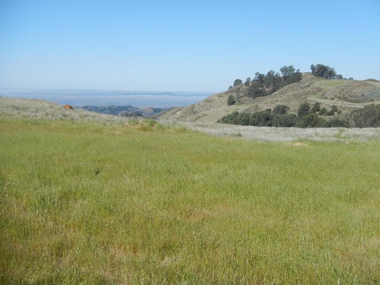 Spirit Pine Sanctuary landscape